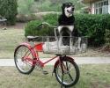 cycle-truck-smoove-n-basket-2